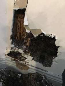 Termite damage to interior wall of a home.