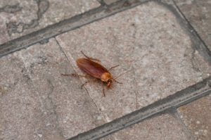 Cockroach on pavement